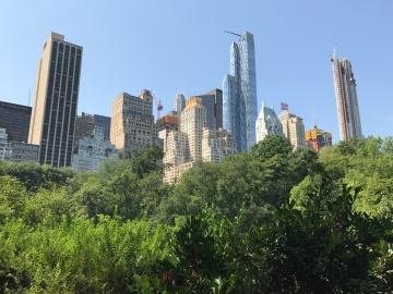 Skyscrapers meet trees