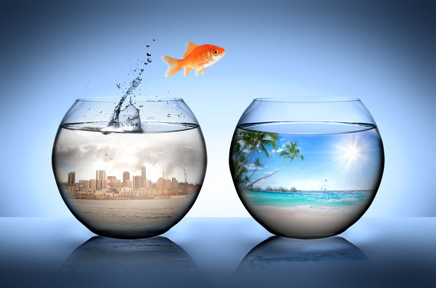 35507939 - goldfish jumping away from city for go to tropical beach